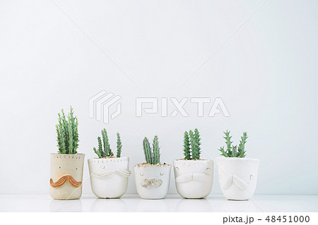Cactus in clay pots plants in different pots. 48451000