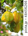 スターフルーツ トロピカルフルーツ 果実の写真 48456266