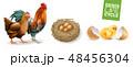 命 生命 鳥のイラスト 48456304