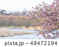 春 花 自然の写真 48472194