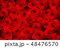 薔薇 バラ 花のイラスト 48476570