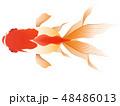 金魚 観賞魚 琉金のイラスト 48486013