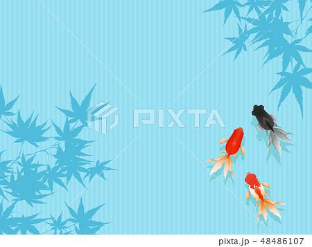 金魚 48486107