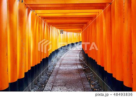 京都・伏見稲荷大社 48493836
