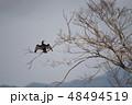 野鳥 成鳥 冬の写真 48494519