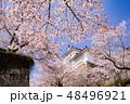 城 津山城 桜の写真 48496921