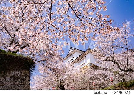 桜咲く津山城備中櫓 48496921