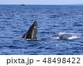 残波岬沖のザトウクジラ 48498422
