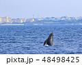 残波岬沖のザトウクジラ 48498425