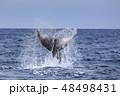 残波岬沖のザトウクジラ 48498431