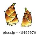 筍 竹の子 たけのこ イラスト 48499970