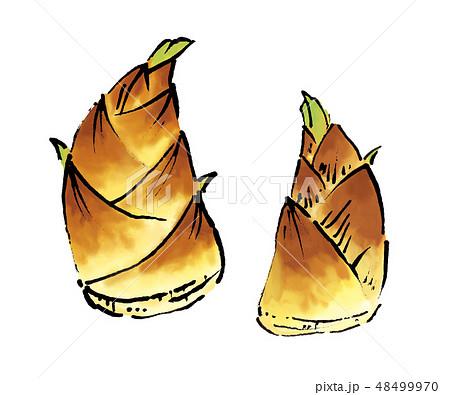 筍 竹の子 たけのこ イラストのイラスト素材 48499970 Pixta