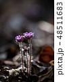 花 春の花 春の写真 48511683