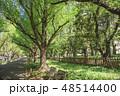 並木 新緑 並木道の写真 48514400