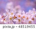 桜 コピースペース 花の写真 48519455