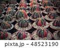 さぼてん サボテン 仙人掌の写真 48523190