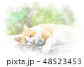 猫 昼寝 野良猫のイラスト 48523453