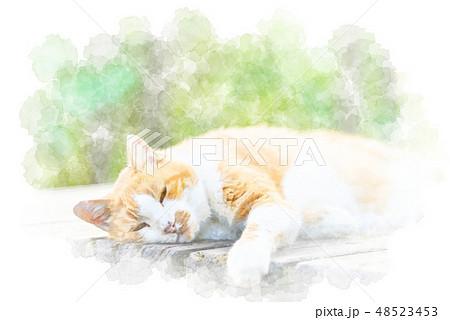 眠る猫 水彩画風 48523453