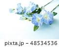 朝顔 48534536
