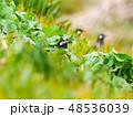 鳥 小鳥 野鳥の写真 48536039