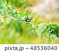 鳥 小鳥 野鳥の写真 48536040
