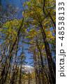 紅葉の上高地 カラマツ並木と穂高連峰 48538133