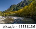 紅葉の上高地 カラマツ並木と梓川 48538136