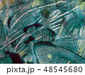 texture 48545680