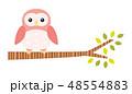 木に止まるフクロウ 48554883