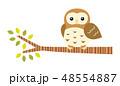 木に止まるフクロウ 48554887