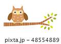 木に止まるフクロウ 48554889