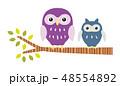 木に止まるフクロウ 48554892