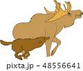 動物 獣 バッファロー 48556641