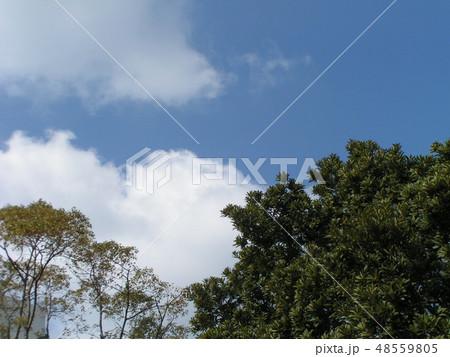 青空と白い雲 48559805