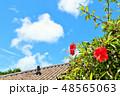 沖縄 夏の青空とハイビスカス 48565063