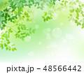 新緑 葉 春のイラスト 48566442