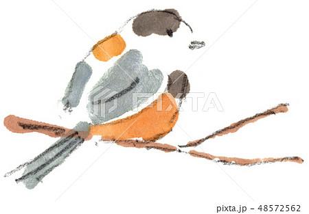 冬の鳥-ヤマガラ 48572562