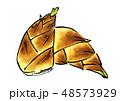 筍 竹の子 たけのこ イラスト 48573929