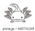 ウーパールーパー Axolotl ぬりえ 48574109