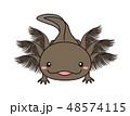 ウーパールーパー Axolotl ブラック 48574115