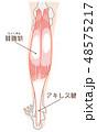 腓腹筋 アキレス腱 名称入り 48575217