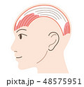 前頭筋 帽状腱膜 後頭筋 48575951