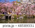 三島大社 池 日本の写真 48589331