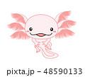 ウーパールーパー 全身 Axolotl ピンク 48590133