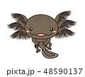 ウーパールーパー 全身 Axolotl マーブル 48590137