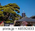 梅が満開の中山寺 48592833