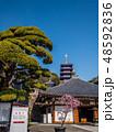 梅が満開の中山寺 48592836