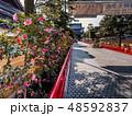 梅が満開の中山寺 48592837