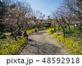 梅が満開の須磨離宮公園 48592918