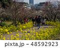 梅が満開の須磨離宮公園 48592923